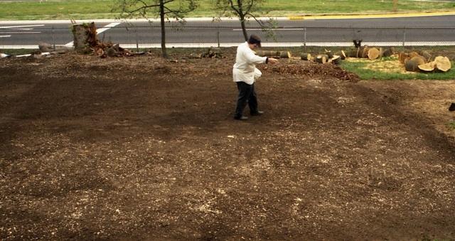 HW sowing