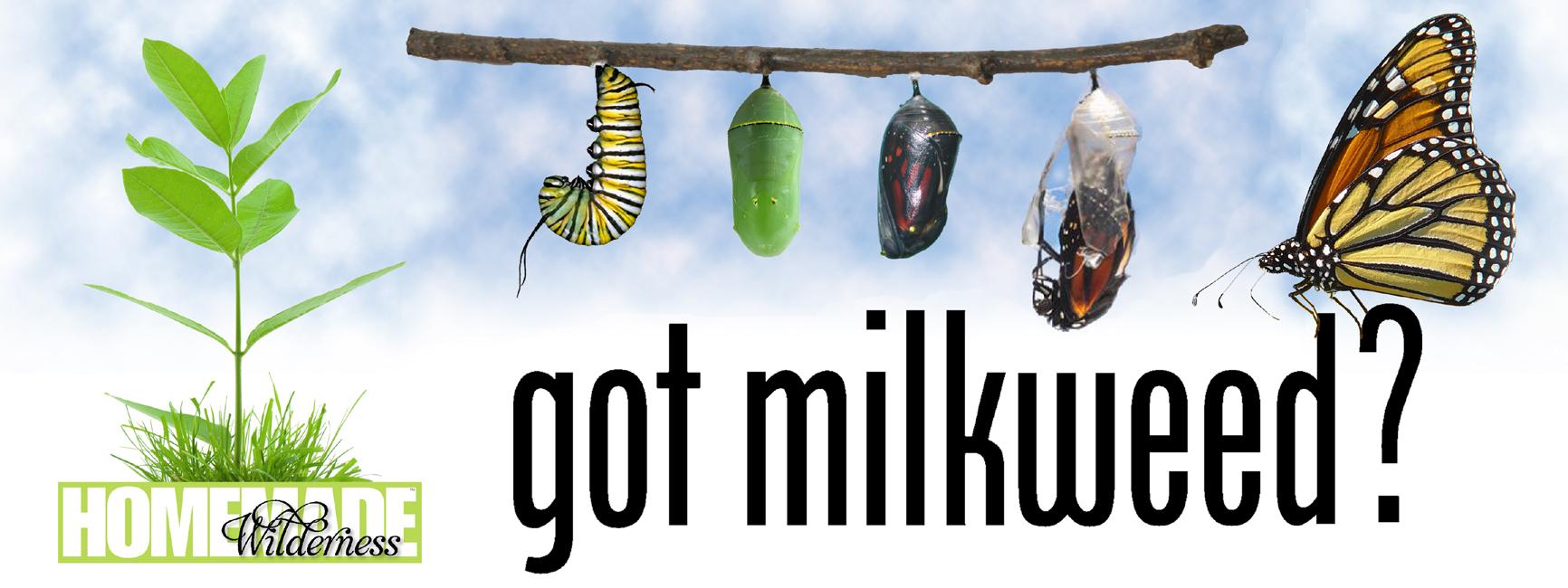 Bumper Sticker Got Milkweed? Decal